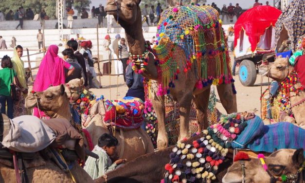 India's Exotic Pushkar Camel Fair